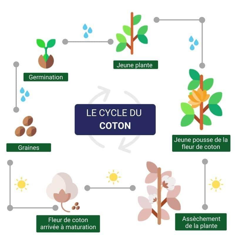 le-cycle-du-coton