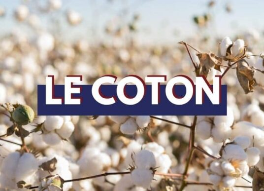 coton-bio-made-in-france-tranquille-emile
